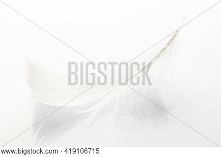 Feather Design. Multicoloured Pastel Angel Feather Closeup Texture On White Background In Macro Phot