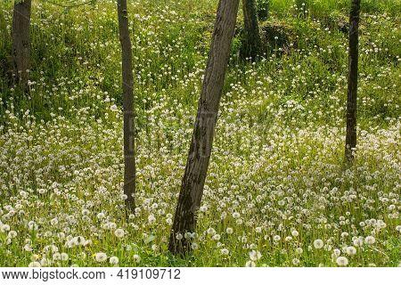 A Late April Woodland Landscape Close To The North East Italian Village Of Orzano In Friuli-venezia