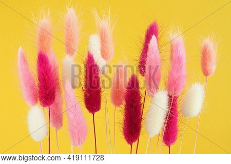 Pink, White, Light Coral And Magenta Color Haretail Flowers (lagurus Ovatus) On A Yellow Background.