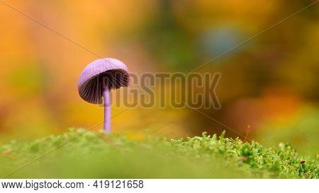 Mushroom. Small Orange Mushroom On Green Moss. Fantasy, Mushrooms In Mystery Autumn Forest. Beautifu