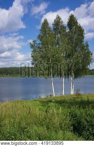 Single Birch Tree Standing On Lake Waterside On Bright Summer Day