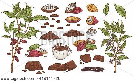 Set Of Cacao Sketches - Chocolate, Beans, Plant Branches And Cup Cocoa Drink.