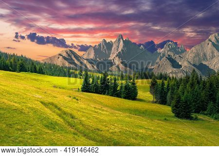 Spruce Trees In Mountains At Sunset. Composite Image With Rocky Peaks In The Distance. Summer Countr