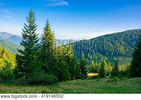 Spruce Trees On The Mountain Meadow. Wonderful Summer Landscape In The Morning. Idyllic Nature Backg