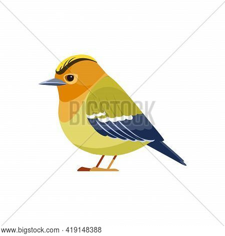 Kinglet Bird. Golden-crowned Kinglet Is A Very Small Songbird In The Family Regulidae. Cartoon Flat