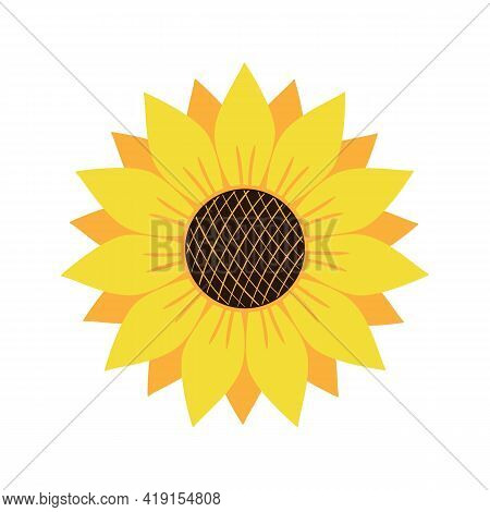 Vector Illustration Of Yellow And Orange Sunflower Isolated On White Background. Bright Summer Flowe