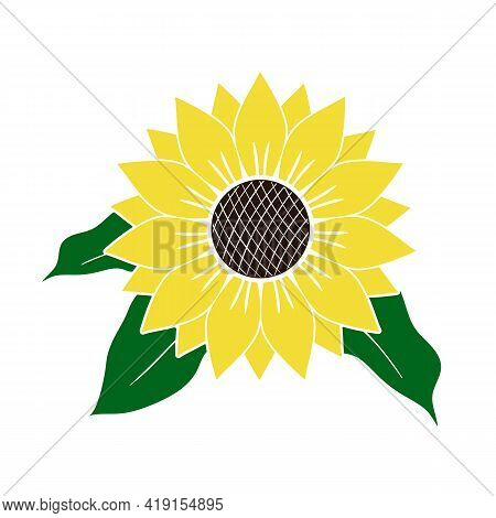 Vector Illustration Of Yellow Sunflower With Green Leaves Isolated On White Background. Bright Summe