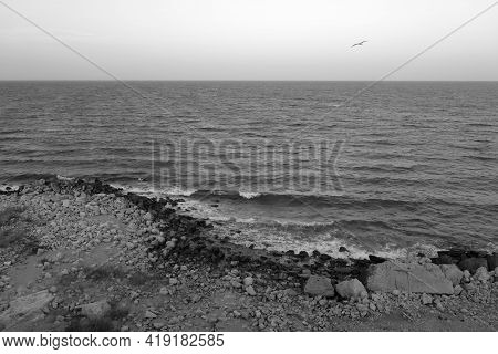 Stony Beach, Sea View And Flying Seagull In Black And White. Seasonal Natural Background.