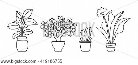 Indoor Plant In A Pot. Black And White Sketch Collecton. Outline Rubber, Gerberra, Tree And Cactus.