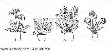 Indoor Plant In A Pot. Black And White Sketch Collecton. Gerbera, Peace Lily And Chamomile. Vector D