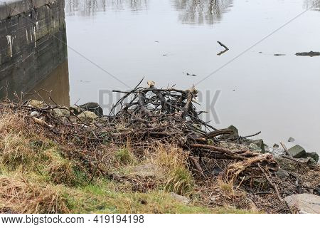 The Rocky Shoreline Of A Tidal Estuary With Driftwood Piled Up