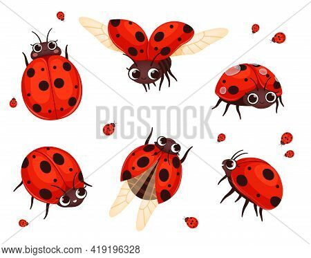 Ladybug. Flying Closeup Insects In Action Poses Nature Bugs Nowaday Vector Illustrations Of Cartoon