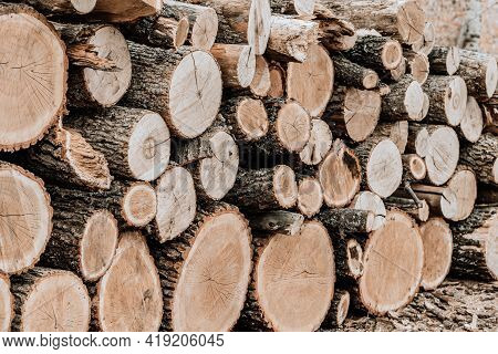 Stacked Wood Logs For Winter. Logging Timber Wood Industry.