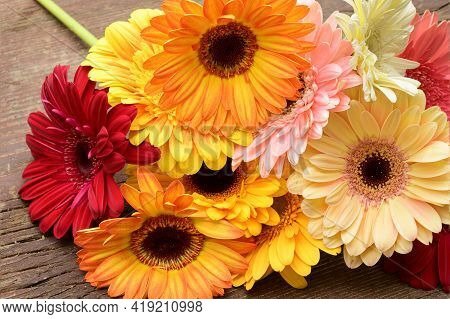Very Nice Colorful Gerber Flower Bouquet Close Up