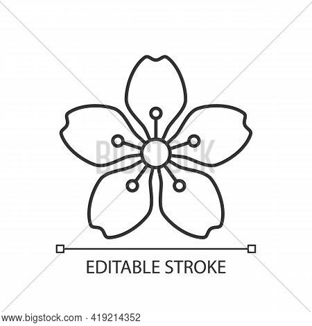 Cherry Blossoms Linear Icon. Japanese Sakura. Seasonal March Flowers. Tree Bloom. Chinese Spring. Th