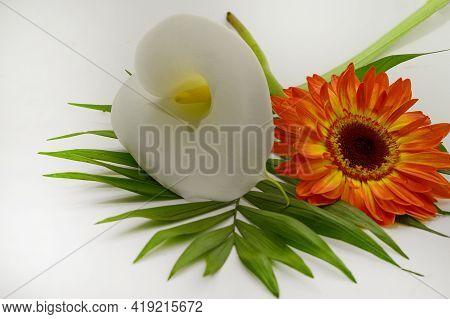 Beautiful Cala And Gerber Flower Close Up