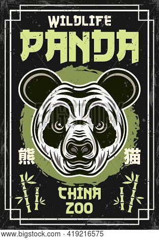 Panda Head Vintage Colored Poster For China Zoo Vector Decorative Illustration. Layered, Separate Gr