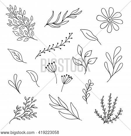 Set Woodland Leaves Illustration. Hand Draw Vector Collection Of Cute Foliage. Line Art. Summer And