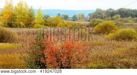Autumn View With Colorful Vegetation In The Meadow. Golden Autumn