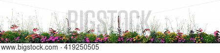 Annual Flowers Flowerbed Panorama, Isolated Horizontal Panoramic Blooming Cardinal Flower Bed Closeu