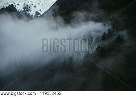Minimal Mountain Scenery With Low Clouds Among Coniferous Trees On Steep Slope. Minimalist Alpine La