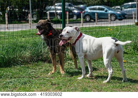 Two Tired Dog Friends Are Standing Together With Mouth Open, Tongue Out In An Enclosure For Pets Out