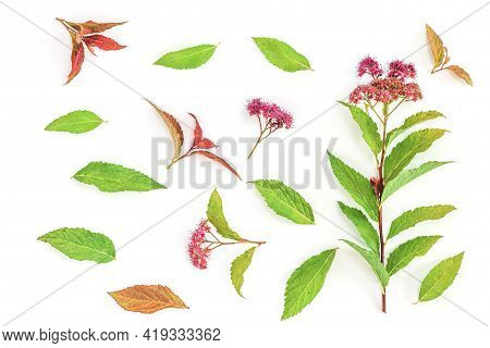 Colorful Wildflowers On White Background. Flat Lay, Top View. Floral Background
