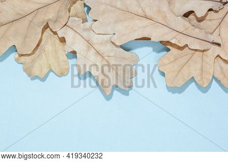 Autumn Oak Leaf On Blue Background. Flat Lay, Top View, Copy Space. Thanksgiving Lifestyle