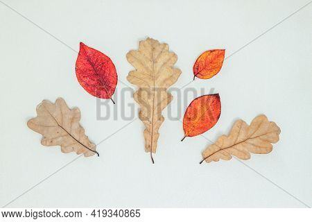 Autumn Composition. Dry Autumn Leaves, Acorn, Pine Cones On White Background. Flat Lay, Top View, Co