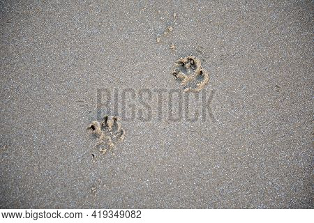 Two Puppy Paw Prints In Sand At Beach