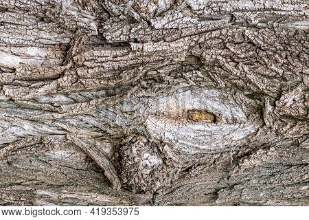 Detail Of The Trunk Of An Old Tree With A Long-cut Branch. Details Of Old Trees Show Interesting Sha