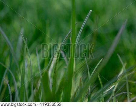 Blurred Fresh Green Grass Close-up On The Lawn. View From The Bottom Of The Grass. Summer.