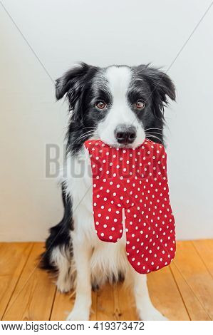Funny Cute Puppy Dog Border Collie Holding Kitchen Pot Holder, Oven Mitt In Mouth On White Backgroun