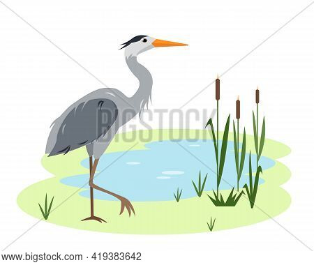Heron Bird On Lake Or Pond With Canes And Grass