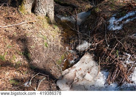 Spring Stream Flows From The Slope In The Forest.there Are Remnants Of Melting Snow, Wood And Branch