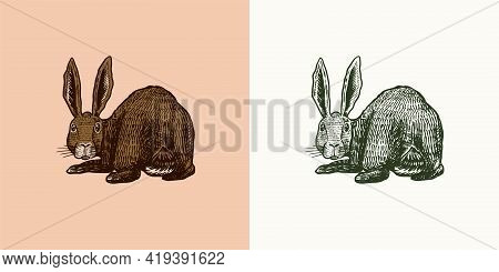 Wild Hare. Rabbit Looks Back. Bunny Or Coney. Hand Drawn Engraved Old Animal Sketch For T-shirt, Tat