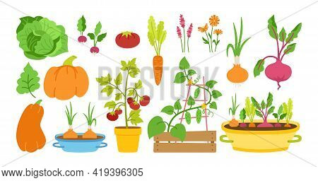 Gardener Flat Cartoon Set For Garden. Vegetable Village Seedlings, Garden Sprout Cucumber And Tomato