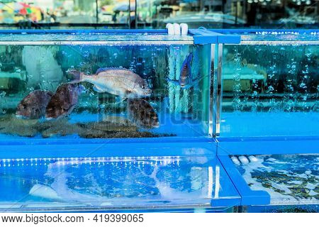 Various Types Of Live Fish In Aquarium Tank For Sale At Seaport Open Market.