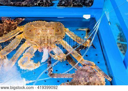 Large Crab At Seaside Market In Aquarium Tank Eating Raw Fish