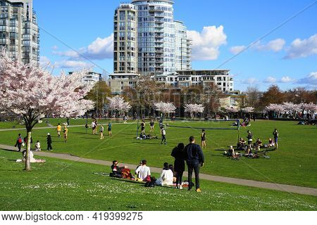 People Enjoyng Park On Sunny Day. Beautiful Cherry Blossom On Background. Vancouver, Bc, Canada. Dav