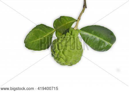 Bergamot Fruit With  And Leaf Isolated On White Background.