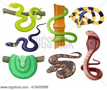 Snakes, Wild Tropical Serpents Isolated On White Background. Cobra, Grass Snake, Ahaetulla Prasina,