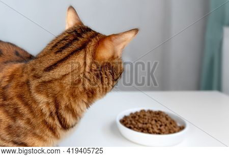 Bengal Cat Looks With Appetite At A Cup Of Dry Food