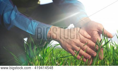 Farmer Hand. Man Farmer A Working In The Field Inspects The Crop Wheat Germ Eco Natural A Farming. B