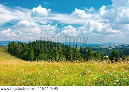Forest On The Grassy Hill. Beautiful Rural Landscape Of Carpathian Mountains In Summer. Bright Sunny