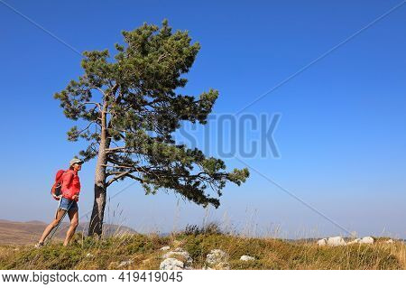 Tourist Girl With Walking Sticks Going Through A Mountainous Area And Admires The Beautiful Views Of