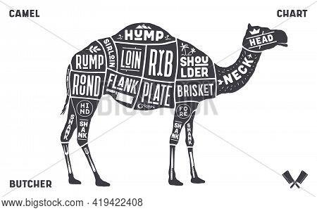 Camel, Dromedary. Scheme, Diagram, Chart Pork, Butcher Guide