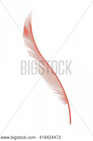 Coral detailed feather of bird.  decorative fluffy pink feather of flamingo or goose. Plume icon isolated on white background