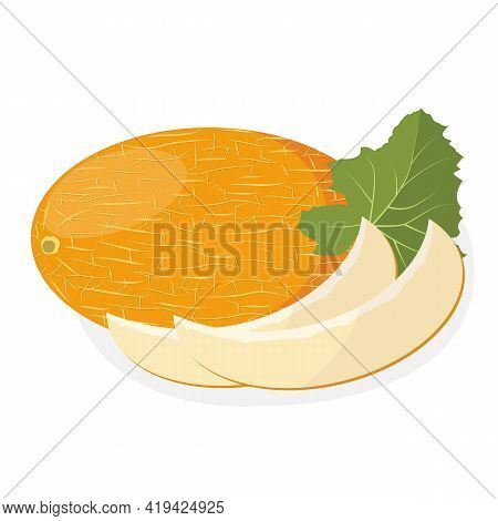 Melon Ripe. Organic Natural Healthy Fruit. Natural Product. Diet Menu. Vector Illustration.