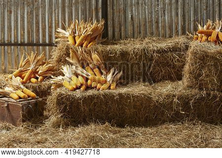 Hay Stacks And Corn Stark In Barn House